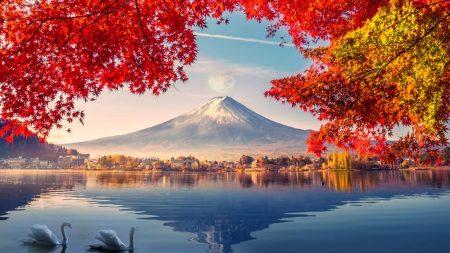 partir au Japon en novembre